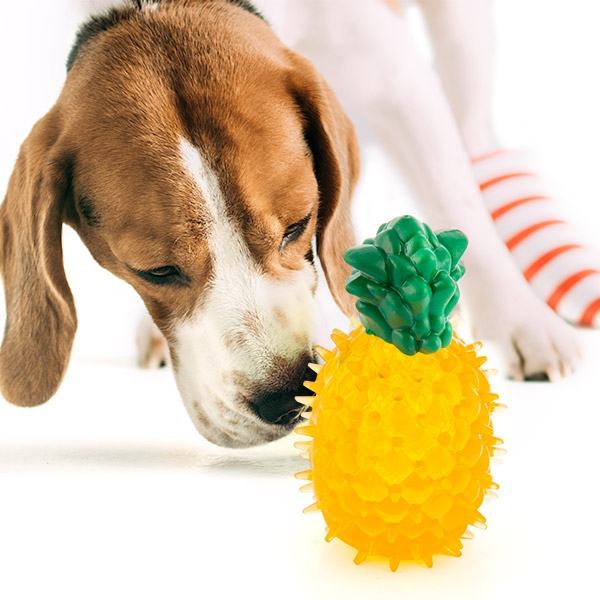 Dog Toy Fruits